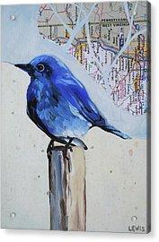 Blue Bird Acrylic Print by Anne Lewis