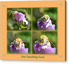 Acrylic Print featuring the photograph Into Something Good by AJ Schibig