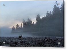 Into The Mist Acrylic Print