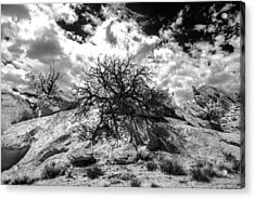 Ir Tree Escalante Acrylic Print