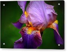 Iris Abstract Acrylic Print