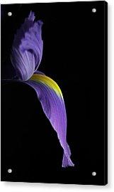 Iris Acrylic Print by Elsa Marie Santoro