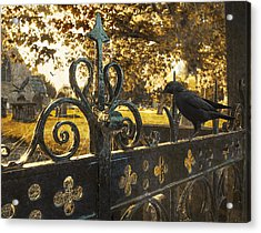 Jackdaw On Church Gates Acrylic Print by Amanda Elwell