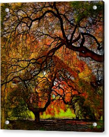 Japanese Maples 2 Acrylic Print