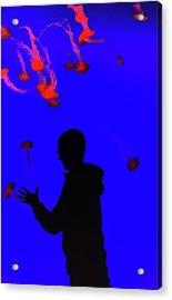Jellyfish Acrylic Print by Martin Newman
