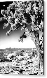 Joshua Tree At Mojave National Preserve In Black And White Acrylic Print