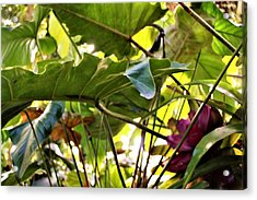 Acrylic Print featuring the photograph Jungle Jive by Mindy Newman