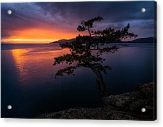 Juniper Point Acrylic Print by Alexis Birkill