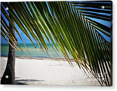 Acrylic Print featuring the photograph Key West Palm by Kelly Wade