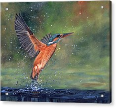 Acrylic Print featuring the painting Kingfisher by David Stribbling