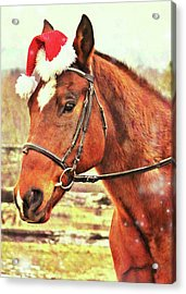 Kirby's Merry Christmas Wish Acrylic Print by JAMART Photography