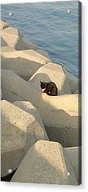 Koneko Means A Kitten. Acrylic Print