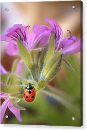 Ladybird Acrylic Print by Meir Ezrachi