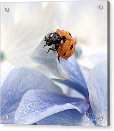 Ladybug Acrylic Print by Nailia Schwarz