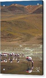 Laguna Colorada, Andes, Bolivia Acrylic Print