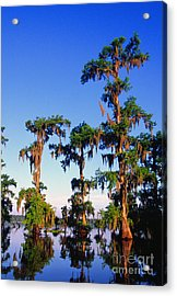 Lake Martin Cypress Swamp Acrylic Print by Thomas R Fletcher