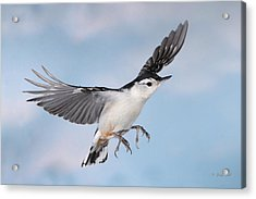 Landing Gear Down Acrylic Print by Gerry Sibell