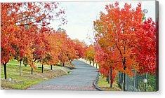 Acrylic Print featuring the photograph Last Days Of Autumn by AJ Schibig