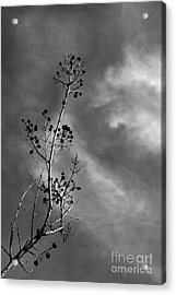 Late Light Acrylic Print by Skip Willits