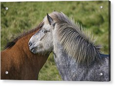 Acrylic Print featuring the photograph Lean On Me by Elvira Butler