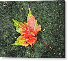 Acrylic Print featuring the photograph leave alone No.2 by Tom Druin