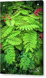 Acrylic Print featuring the photograph Leaves by Charuhas Images