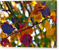 Leaves Of Autumn Acrylic Print