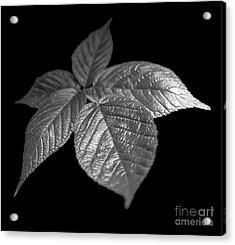 Leaves Acrylic Print by Tony Cordoza