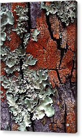 Lichen On Tree Bark Acrylic Print