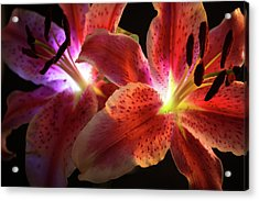 Lilly 001 Acrylic Print by Bobby Villapando