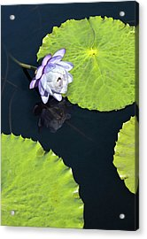Acrylic Print featuring the photograph Lily Love by Suzanne Gaff