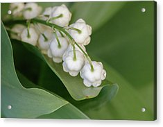 Lily Of The Valley Acrylic Print by Rodger Werner