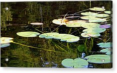Lily Pads On The Lake Acrylic Print