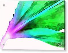 Liquid Lily Acrylic Print