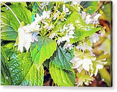 Acrylic Print featuring the photograph Little Orchids by Mindy Newman