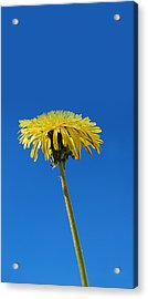 Little Piece Of Sunshine Acrylic Print