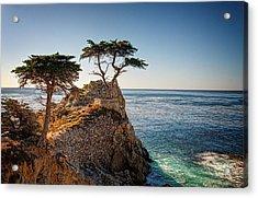Lone Cypress Tree Acrylic Print by James Hammond