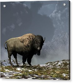 Lonely Bison Acrylic Print