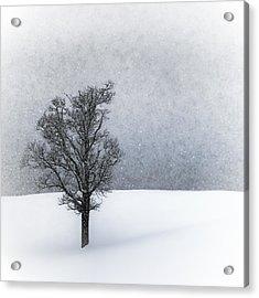 Lonely Tree Idyllic Winterlandscape Acrylic Print by Melanie Viola