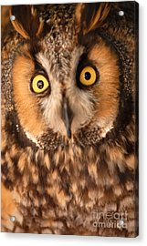 Long Eared Owl Acrylic Print by Dennis Hammer