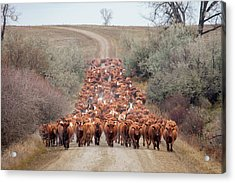 Long Line Of Reds Acrylic Print by Todd Klassy