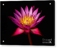 Acrylic Print featuring the photograph Lotus by Louise Fahy