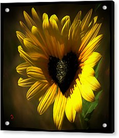 Love Sunflower Acrylic Print