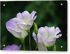Acrylic Print featuring the photograph Lovely Lisianthus by Byron Varvarigos