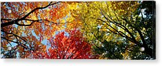 Low Angle View Of Trees Acrylic Print