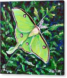 Luna Moth Acrylic Print by Gail Butler