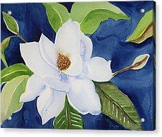 Magnolia Acrylic Print by Janet Doggett
