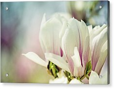 Magnolia Acrylic Print by Nailia Schwarz