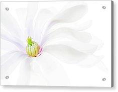 Magnolia Acrylic Print by Rebecca Cozart