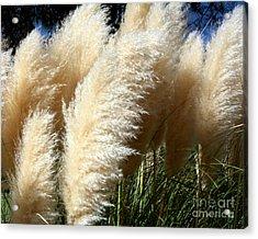 Majestic Pampas Grass Acrylic Print by Merton Allen